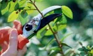 Landscape Pruning Basics